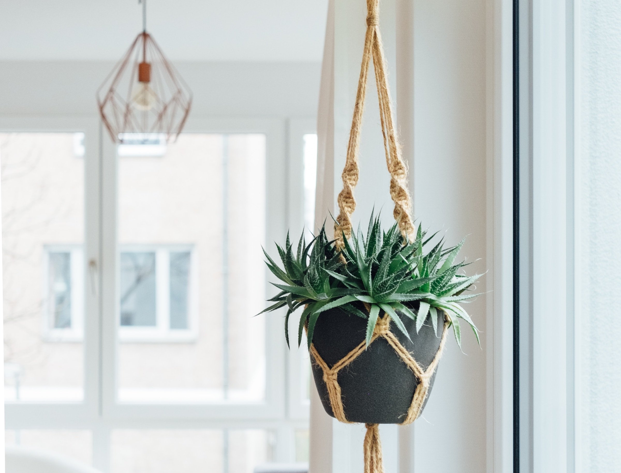 DIY projects for small spaces: add plants to clear the air
