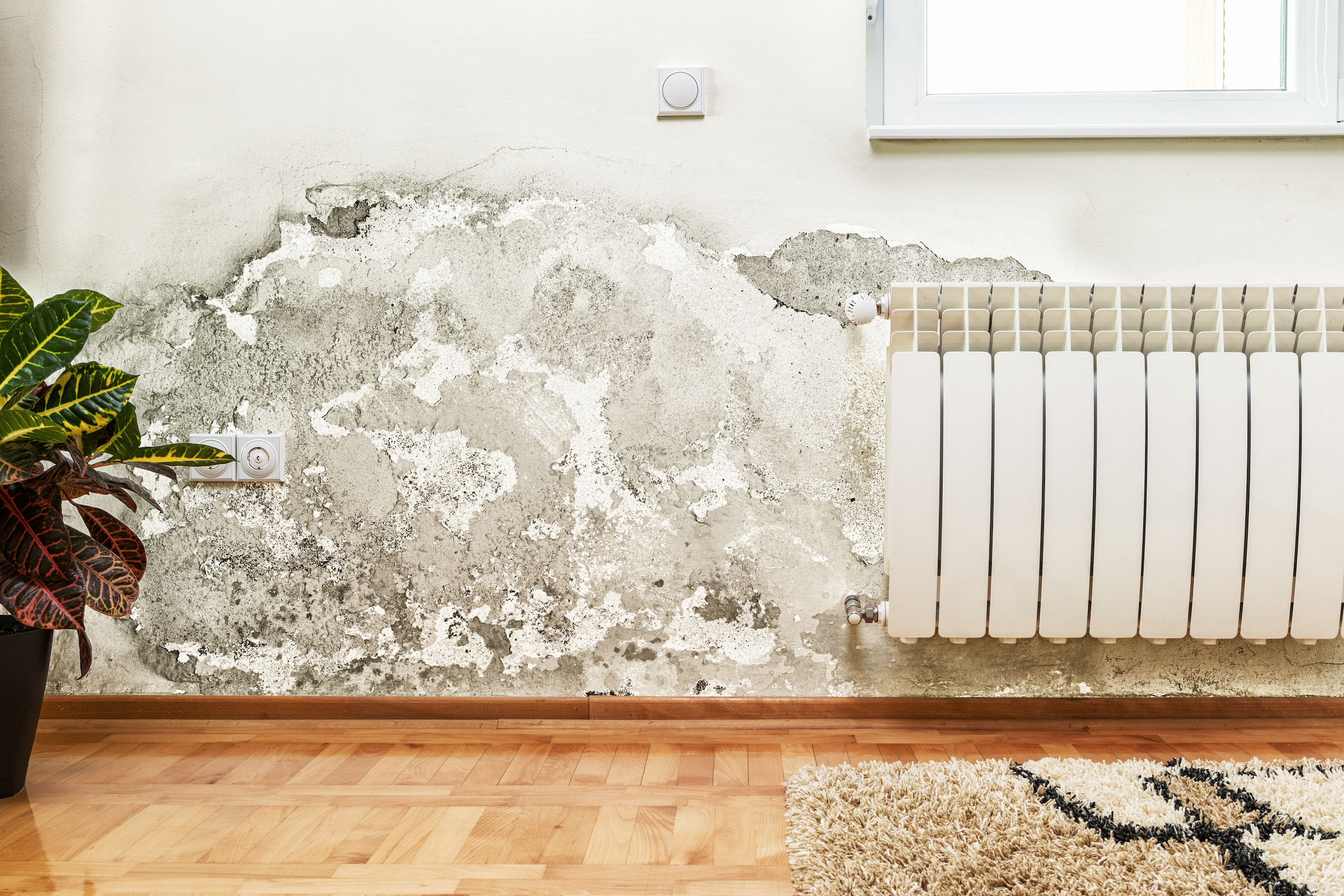 How to get rid of mold in a house: is it dangerous?