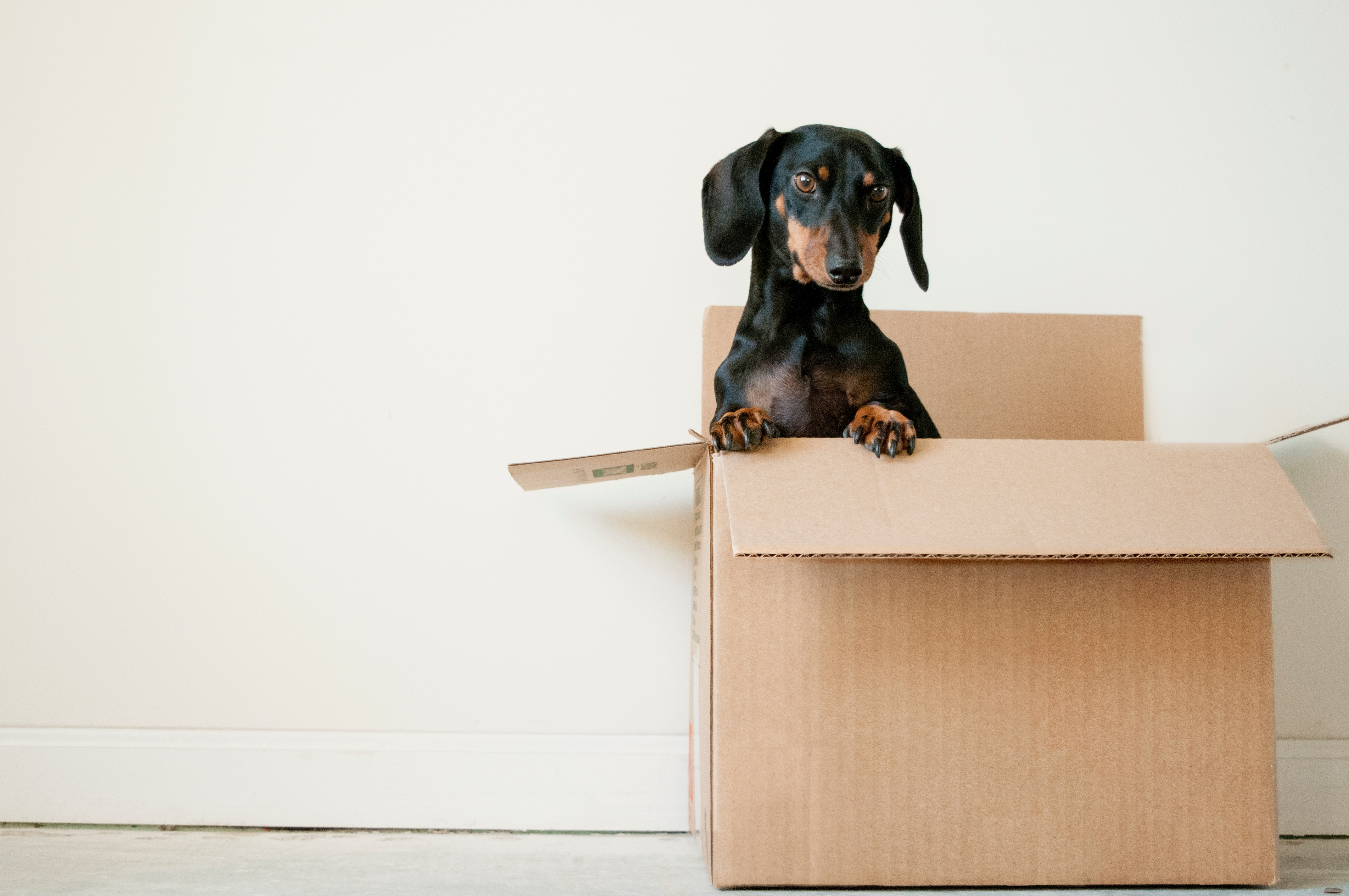 Handymen can also often help with moving services.