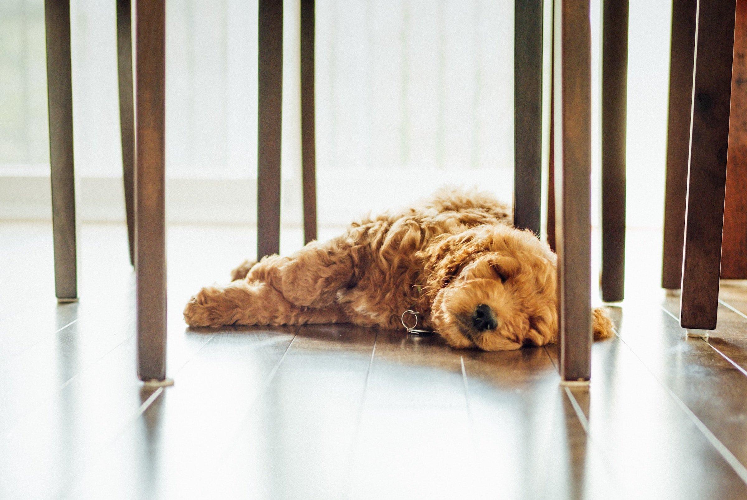 puls-laminate-flooring-pros
